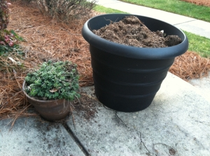 The hobnail boots of my HOA's flower pot Nazis stepped down hard on these miscreant pots. My appeal will be based on a technicality: the pots are for veggies, not flowers.