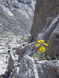 In proof that life grabs hold where it can, a wildflower clings to a rocky ledge alongside a downward chute that was very, very steep.